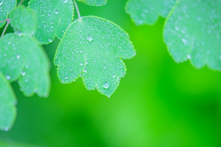 Leaves wet with morning dew