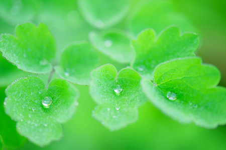 Early in the morning, with water plants Stock Photo