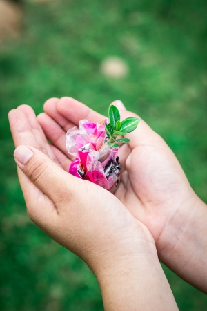 Human Hands Holding Green Plant Over Nature  photo