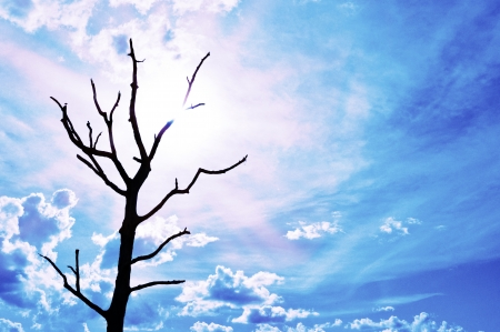 blue sky with dead tree and sun. photo