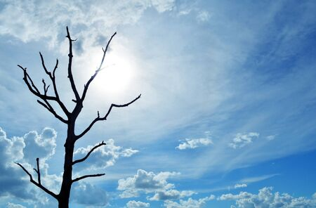 blue sky with alone tree and sunlight photo