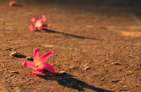 Pink flower on the concrete with sunset background. Stock Photo - 17418261