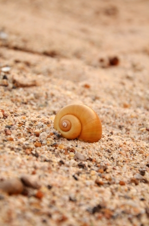 Snail shell on beach in the morning. Stock Photo - 17418352