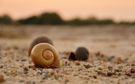 Snail shell on beach in the morning. Stock Photo - 17418296
