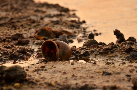 encroach: Snail shell on the beach, the effects of water pollution.
