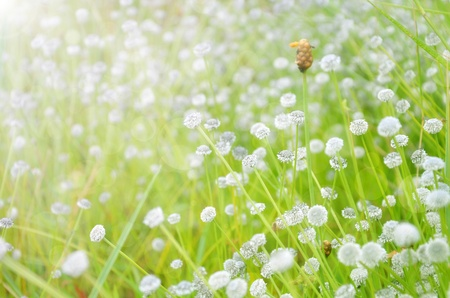 Spring flowers background Stock Photo - 17418317