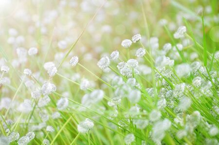Spring flowers background  Stock Photo - 17418318
