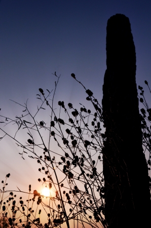 silhouette wild flower with dramatic sunset  Stock Photo