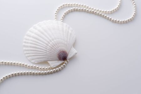 a background image of shell and pearl on white photo