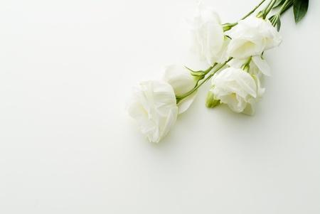 白い背景に白いベルフラワー