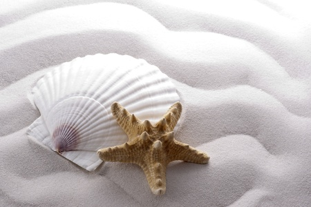 starfish and shell on white wave sand photo