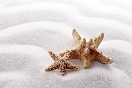 starfish on white wave sand photo