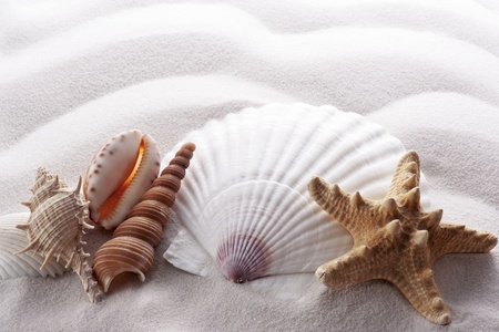 starfish and various shells on white wave sand photo