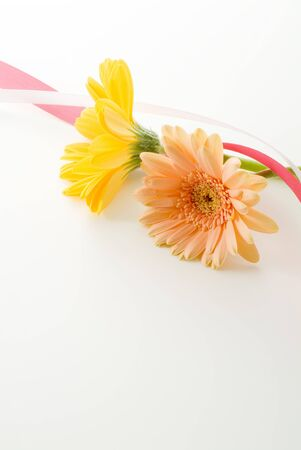 cute daisy and ribbon on white background photo