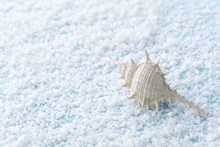 beautiful white shell on sand photo
