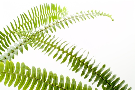 abstract green fern leaf on white background