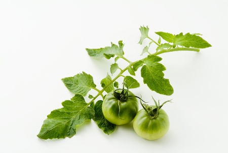Green  tomato and leaves on white background photo