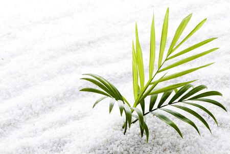 frond: Summer image of palm leaves on white sandy beach
