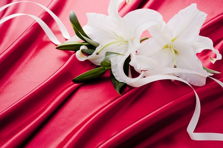 White lily Casablanca with ribbon are on the red satin. Stockfoto