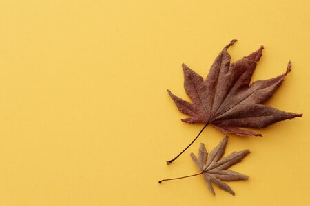Japanese red maple leaves for autumn image photo