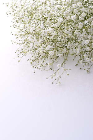 白い背景で赤ちゃんの呼吸花