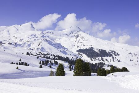 pine trees: Pine trees in swiss snow-covered mountain with clouds floating low Stock Photo