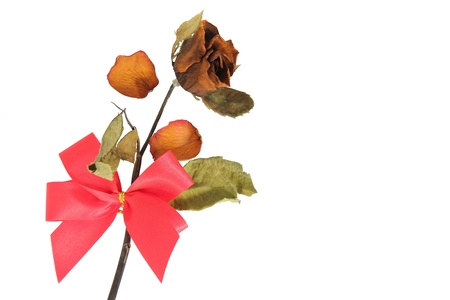 Dried rose Stock Photo - 13135743