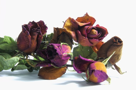 Dried rose Stock Photo - 13360796