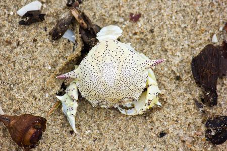 rock bottom: Dead Crab on the Beach Stock Photo