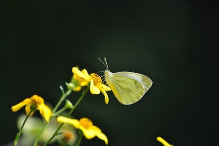idylle: Schmetterling
