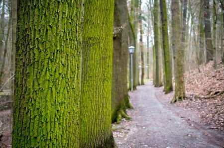 pflanzen: Waldweg Stock Photo