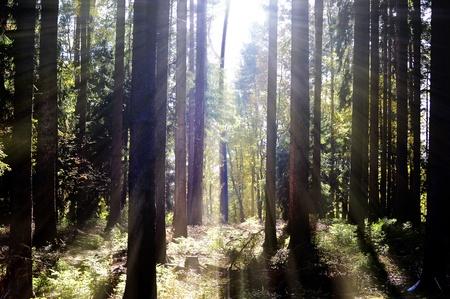 Wald Sonne  Stock Photo