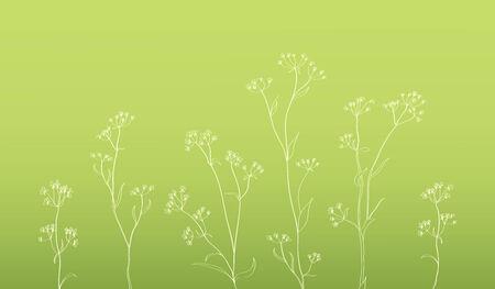 calendula: botanical illustration on pastel green background, nice herbal illustration