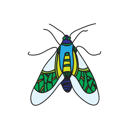 entomologist: vector colored beetle icon for design Illustration