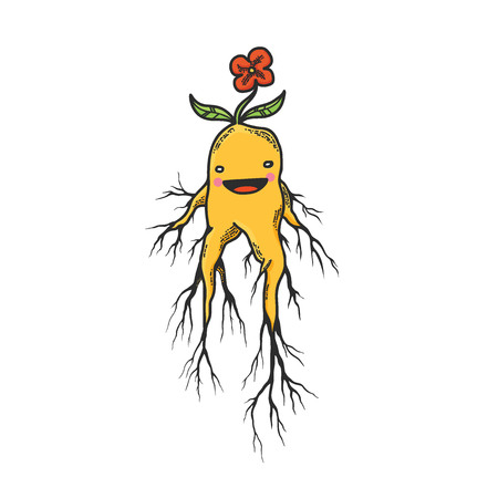 wicca: Vector Illustration of the Cute Mandrake Roots Cartoon Character Isolated on White Background