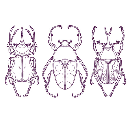 Vector Illustration of Insects Outline Hand Drawn. Set of 3 Beetle Bugs Top View