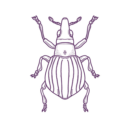 Vector Illustration of Outline Beetle Bug Insect Hand Drawn,  Apion artemisiae