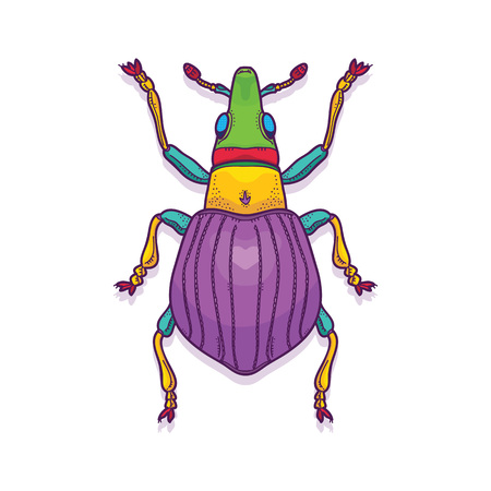Vector Illustration of Colorful Beetle Bug Insect Hand Drawn, Apion artemisiae Ilustrace