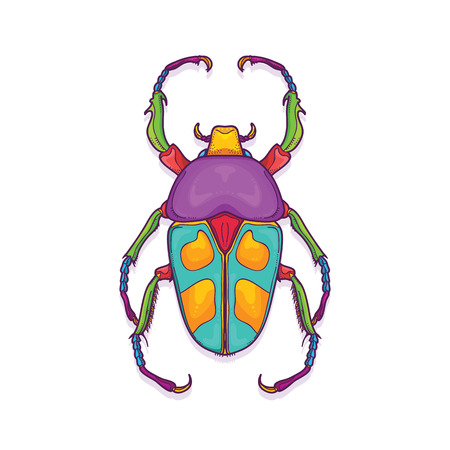 Vector Illustration of Colorful Beetle Bug Insect Hand Drawn, Jumnos ruckeri
