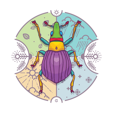 circle of life: Vector Illustration of Insect Beetle Design Elements with Line Graphic. Circle life Day  Night and Four Seasons in Nature Concept