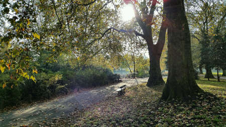 bench alone: London park bench under trees surrounded by leaves in autumn sun
