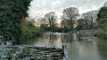 weave: Frozen scene at Greenwich Park, London