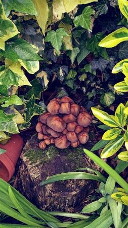 fungi: City Garden Fungi
