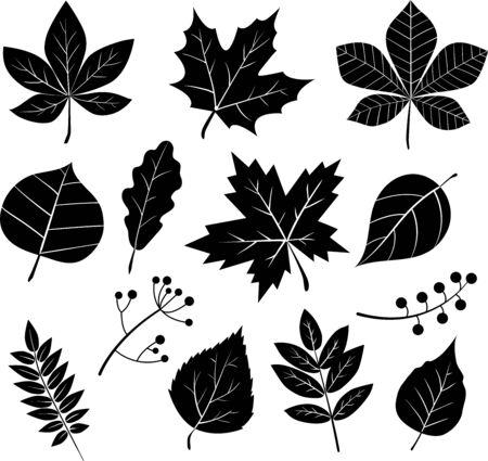 Conjunto de siluetas vectoriales de hojas aisladas sobre fondo blanco. Ilustración de vector