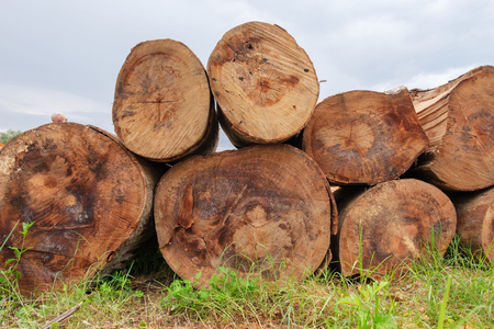 Tree logs piled up on the green grass
