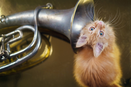 Ginger kitten playing with French horn on the golden background, selective focus Imagens