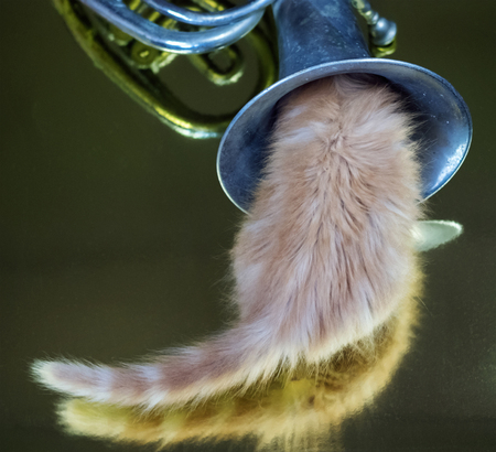 Ginger kitten playing with French horn on the golden background