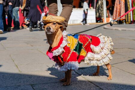 Costumed small dog posing on the street at mask carnival, Venice, Italy