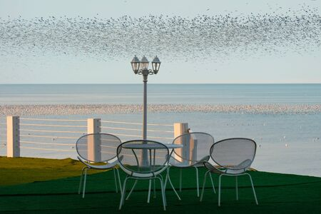The white metal furniture and lamp post on the coast with a background sea and sky full of flock of seagulls