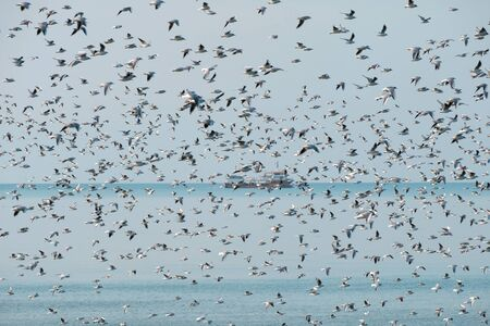Flock of flying seagulls over the sea with fishing trawler on background